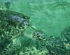 criadero-tortugas
