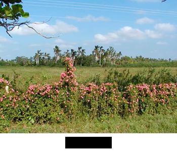 flora-main